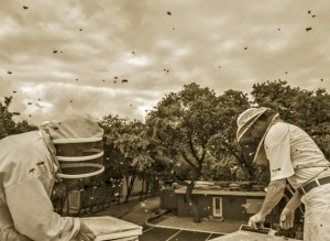 Vignettes of Brandon and Susan Pollard of the Texas Honeybee Guild. Photo by Danny Fulgencio.