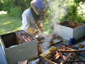 Urban Beekeeper Brandon Pollard Bee-Wrangling one of many micro-apiaries.